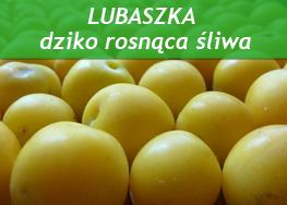 http://psprzelotem.blogspot.com/2015/10/dziko-rosnace-owoce-jadalne-jesien.html