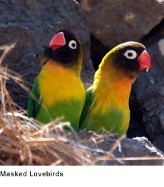 http://maskicaukan.blogspot.co.id/2016/10/perawatan-lovebird-anakan-agar-kelak.html
