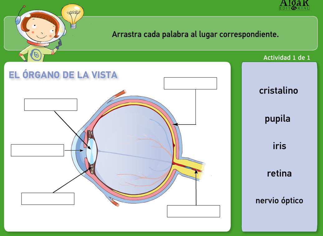 http://www.primerodecarlos.com/TERCERO_PRIMARIA/archivos/actividades_natura_tercero/5/1.swf