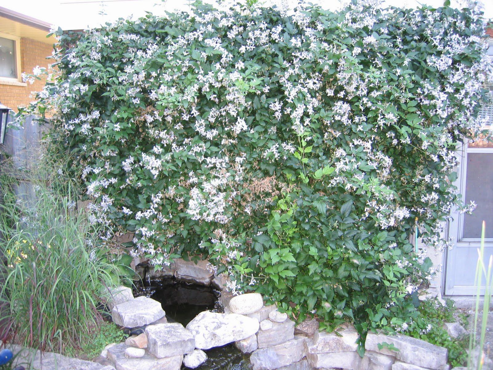 Adventures in Horticulture - KHS Blog