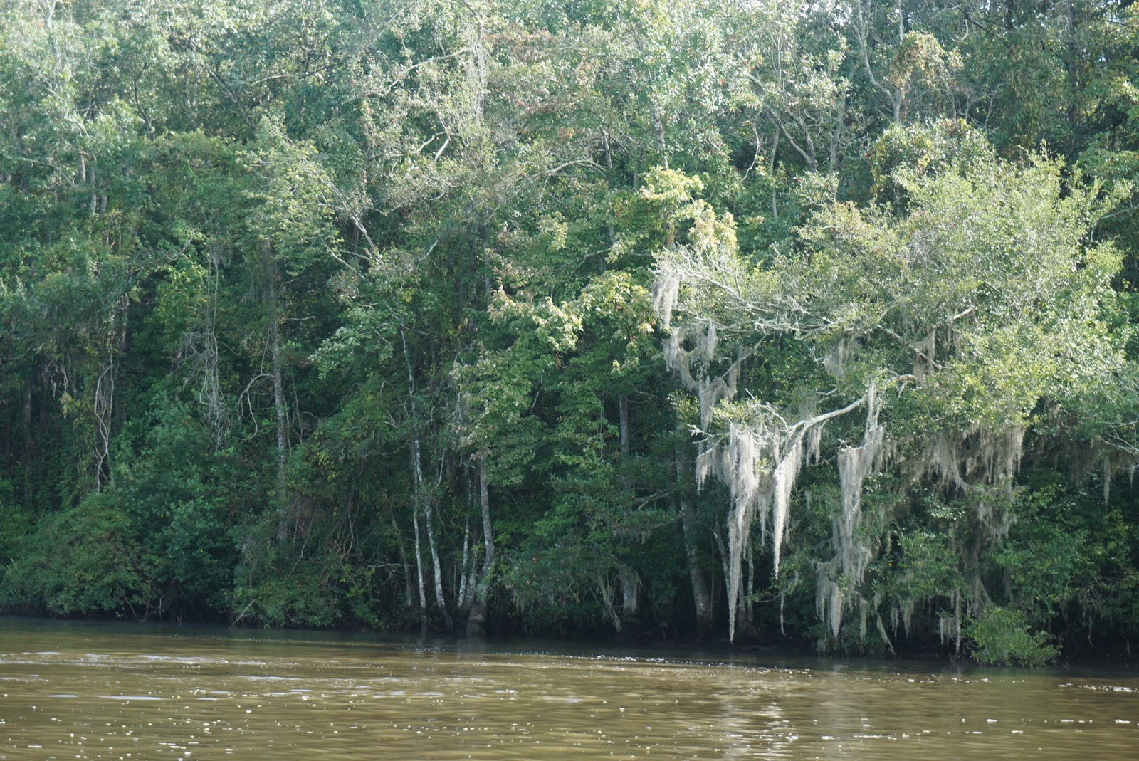 Honey Island Swamp