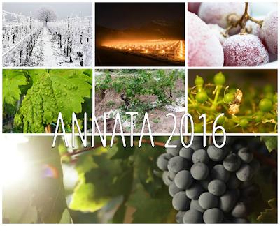 annata 2016 vino