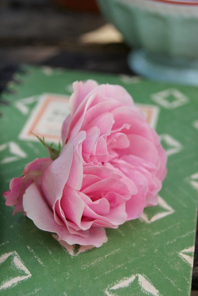 Notizbuch mit Rosenblüte