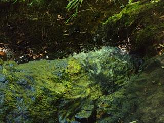Arroio Cristal, Ecoparque Sperry, Canela
