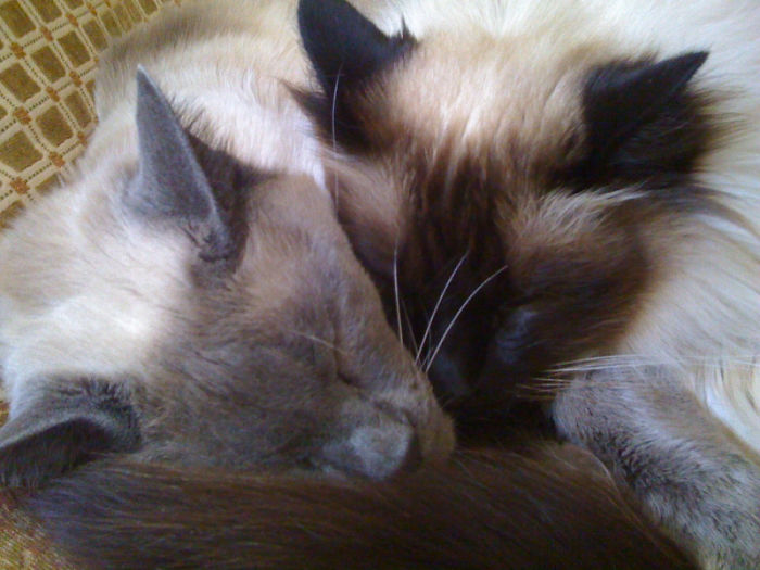 50 Heart-Warming Photos of Animals Growing Up Together - They Were Inseparable For 12 Years, Til This Past Thanksgiving Day When Aiko Left Us And Went To Rainbow Bridge.