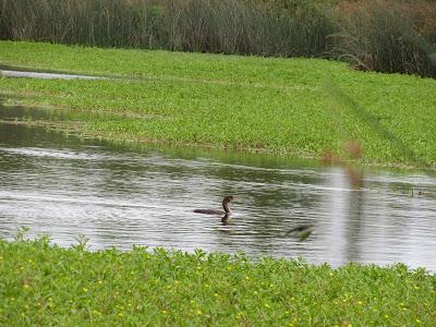 Gray Lodge Wildlife Area California birding hotspot