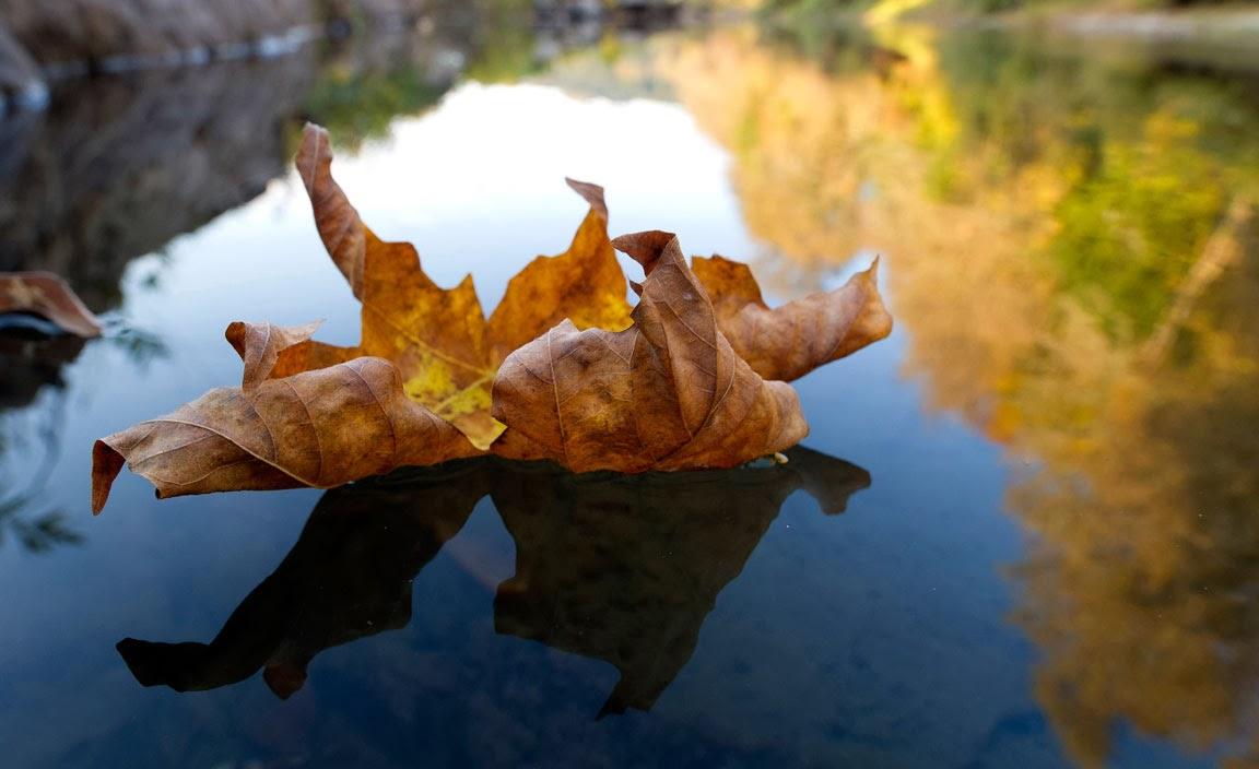 Visualización las hojas del rio