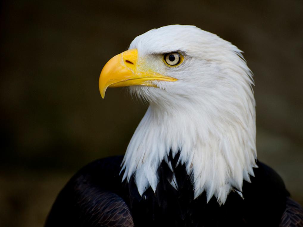 Super Le Grand Changement: La leçon de l'aigle ! FR54