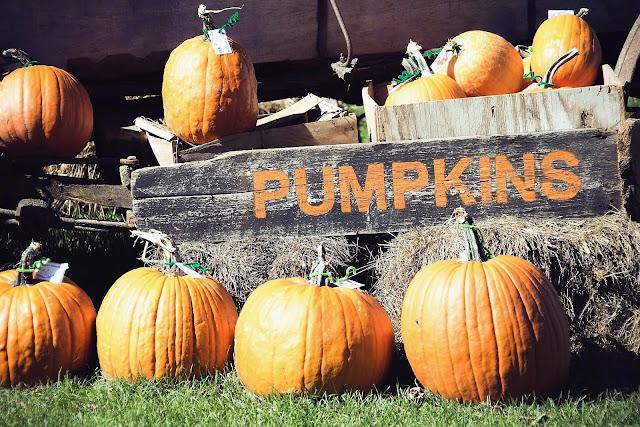 Fall Recipe pumpkin spice bars, Metamora Herald