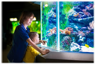 Benefits Maintain ornamental fish at home for health