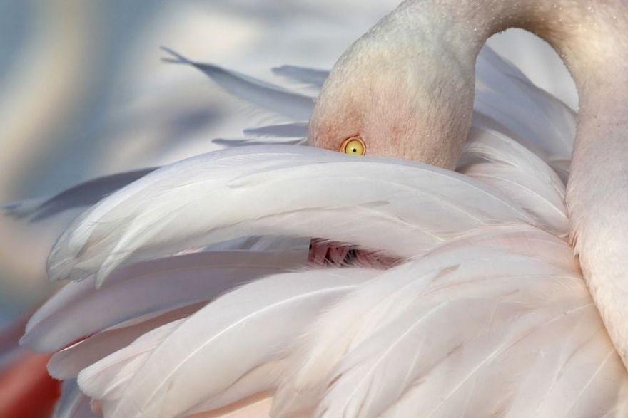 Chiêm ngưỡng những bức ảnh chim hồng hạc đẹp nhất trên thế giới (phần 3), in hồng hạc