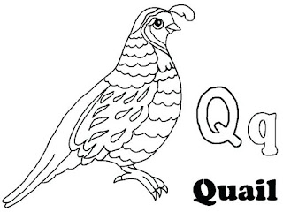 Adorable Quail Coloring Pages For Print