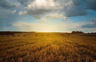 Contoh Peluang Bisnis Usaha Pertanian Yang Memiliki Prospek Menjanjikan