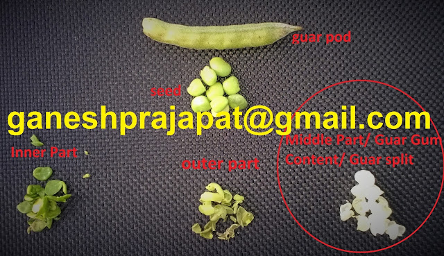 Guar seed, guar gum,  Guar gum cultivation in India , Guar gum seed production in India,