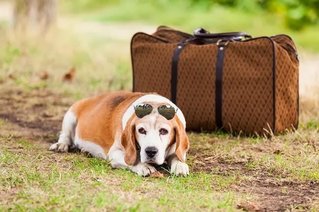 Linie lotnicze dla psów
