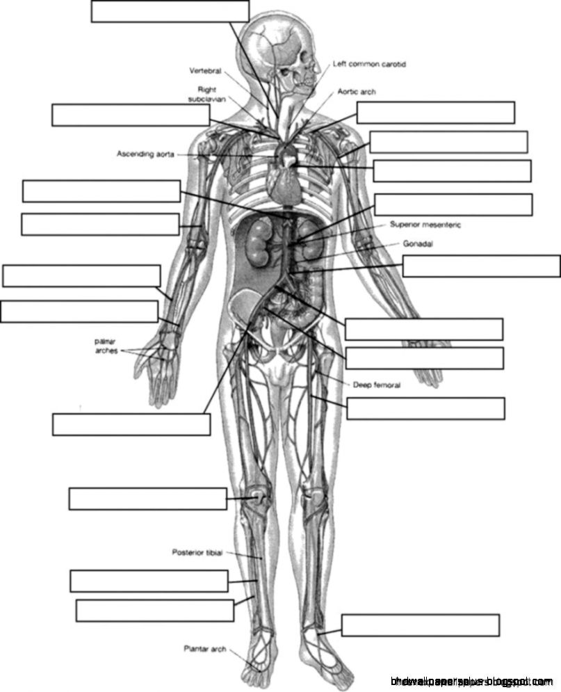 Anatomy And Physiology Coloring Workbook | Coloring Page