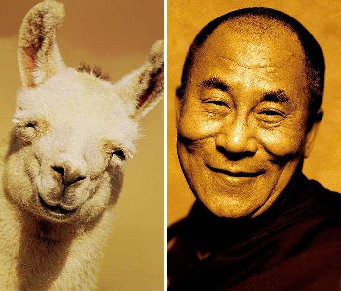 Um Lhama que parece Dalai Lama
