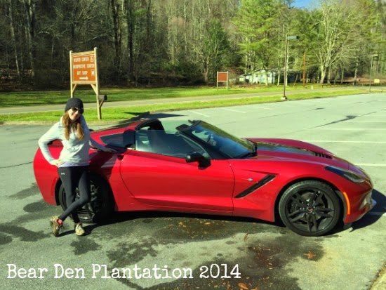 Corvette Stingray on Roan Mountain at Roan Mountain State Park in Tennessee