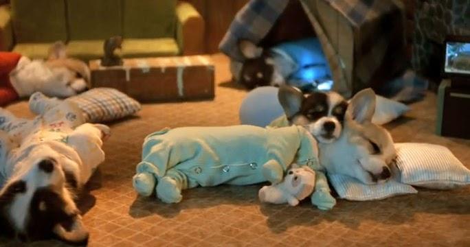 Cute Who Put The Corgi Puppies In Pajamas