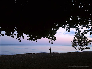 Fresh And Calm In Morning Under The Trees By The Beach, Seririt, North Bali, Indonesia