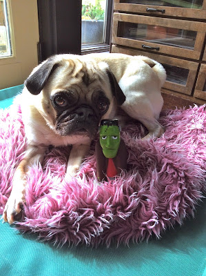 Liam the pug with his Halloween toy