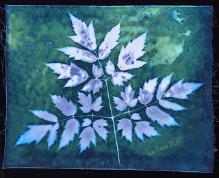 Wet Cyanotype_Sue Reno_Image 71