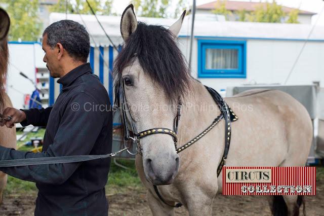 cheval avec un garçon de piste