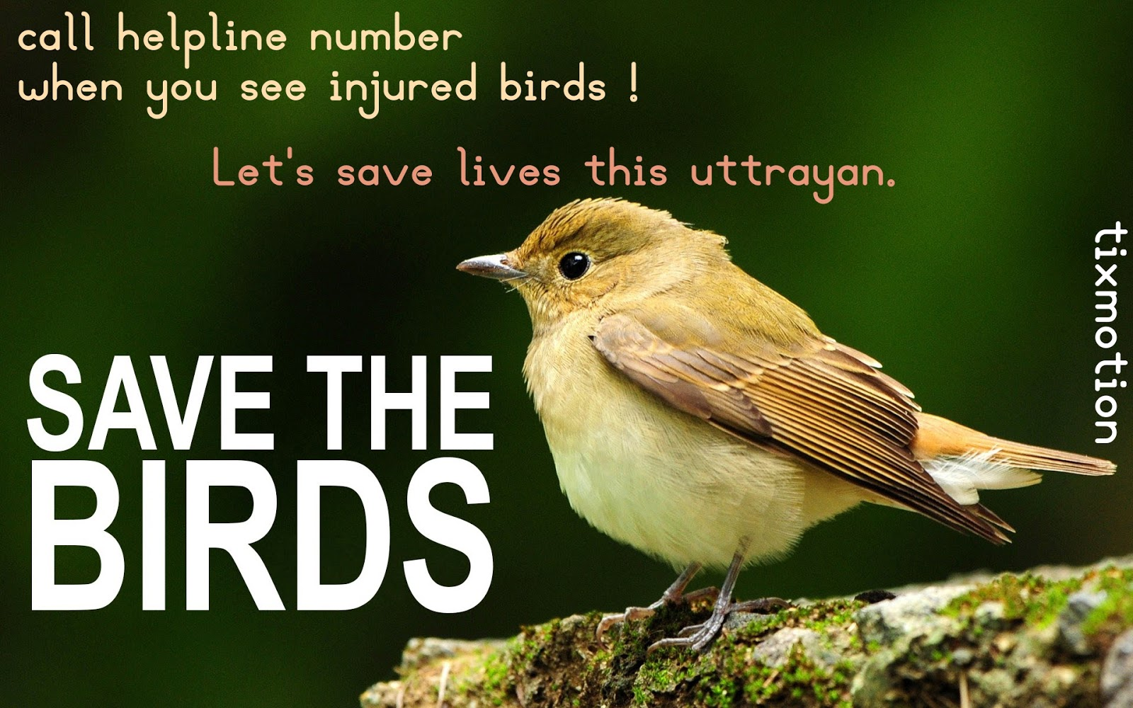 Saving Our Shared Birds