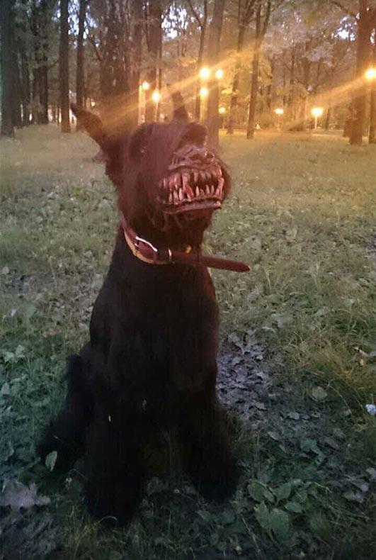 Aterrador bozal convierte a tu perro en un individuo lobo