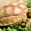 Pengertian, Struktur Tubuh, Ciri, dan Klasifikasi Reptil