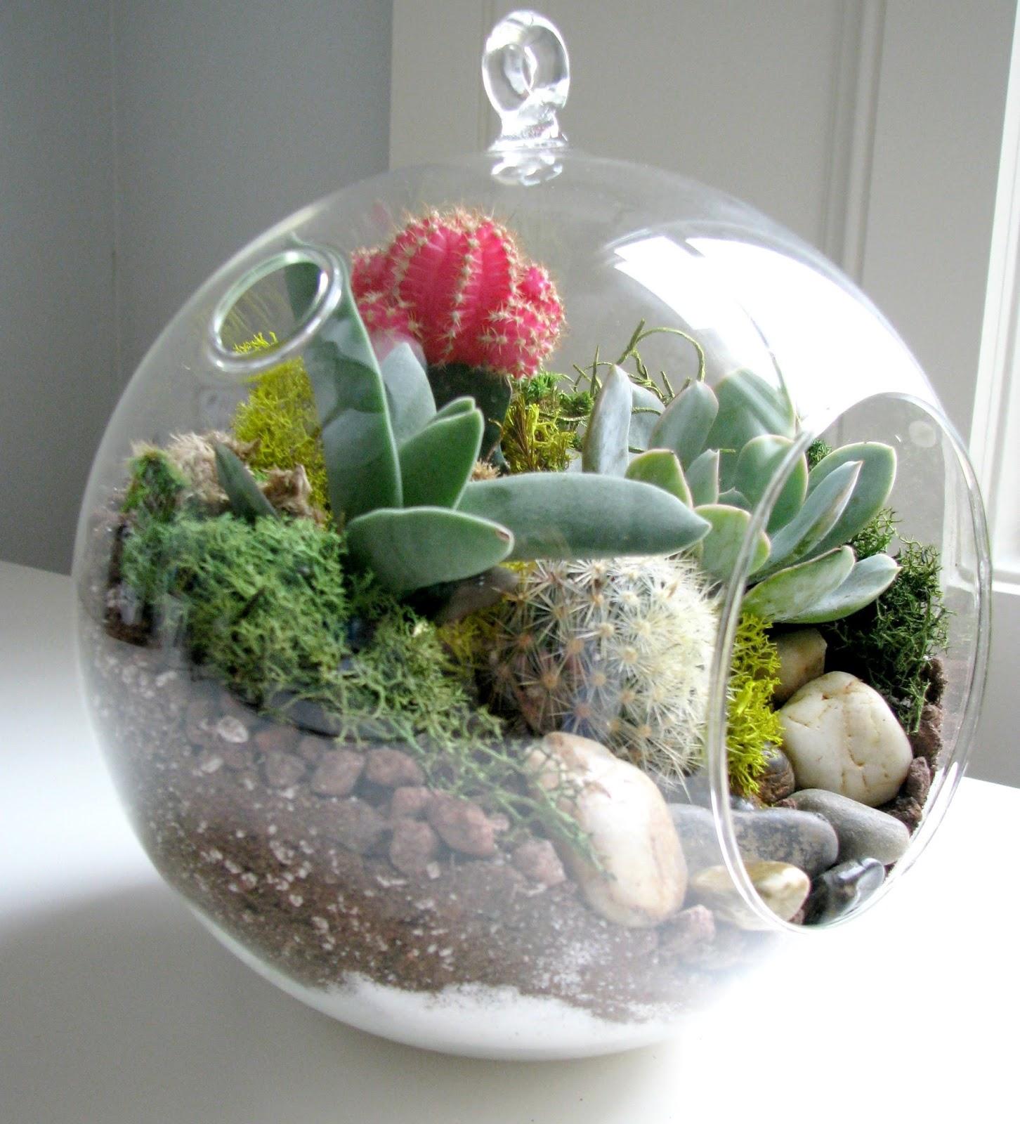 Life Love Larson: Look for Less Challenge: DIY Succulent ...