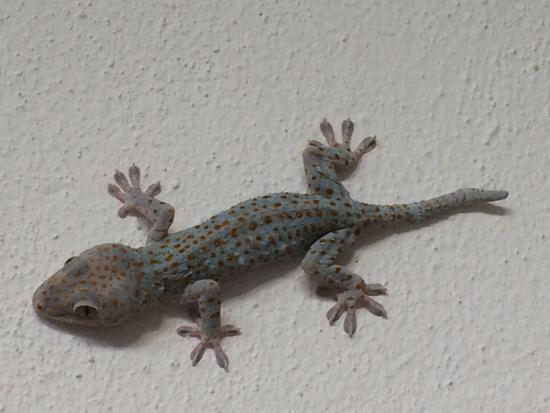 Simple Way To Get Rid Of The Poisonous Animal Called Wall Gecko