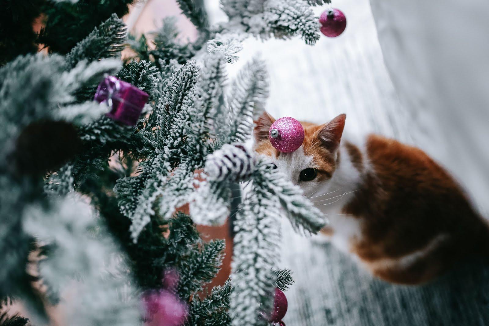 50 choses à faire à Noël