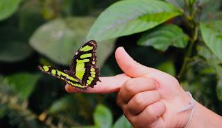 Quand un papillon se pose sur ma princesse