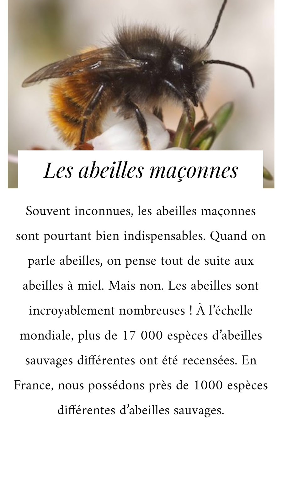 abeilles-maçonnes-indispensables-biodiversité