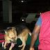 NDLEA intercept 868kg of Tramadol, re-arrests notorious dealer 'Zuma'