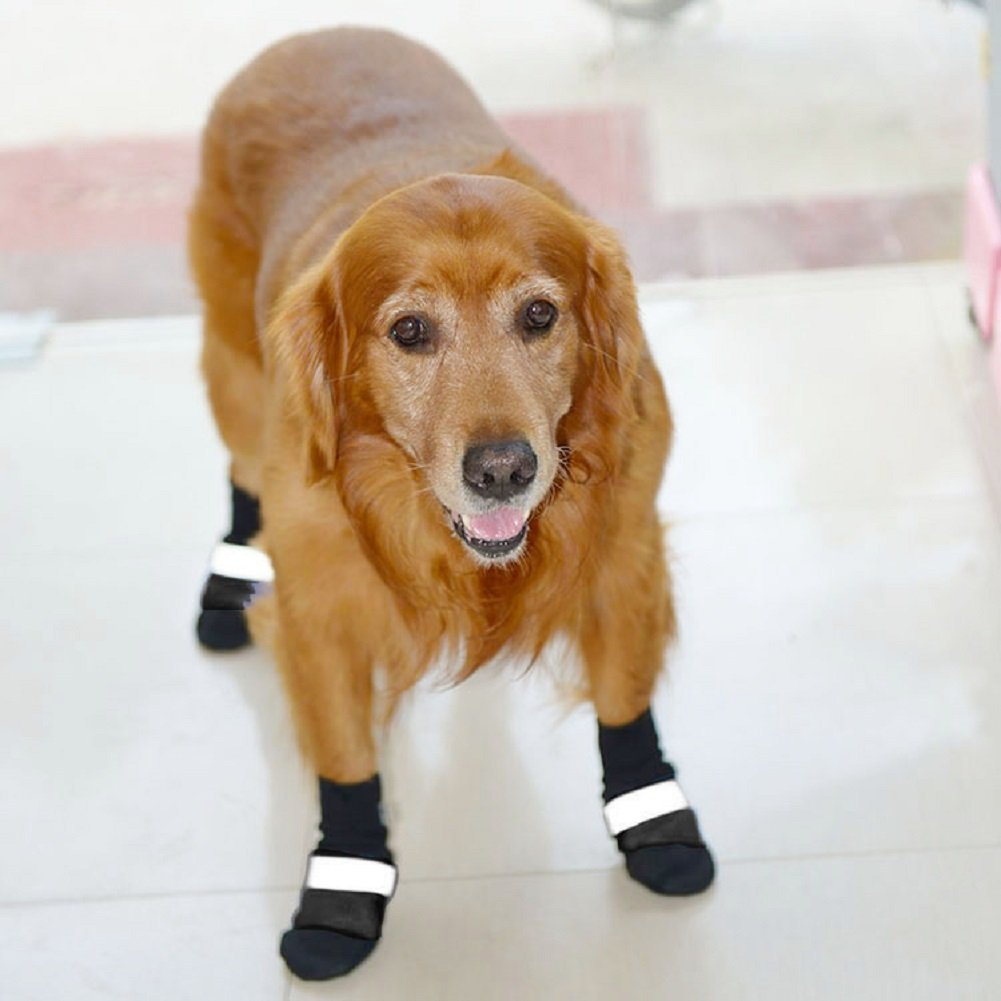 Dog Boots to Keep Dogs Cool in the Summer | www.danslelakehouse.com