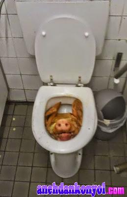 6 Hal Aneh Di Kloset Toilet