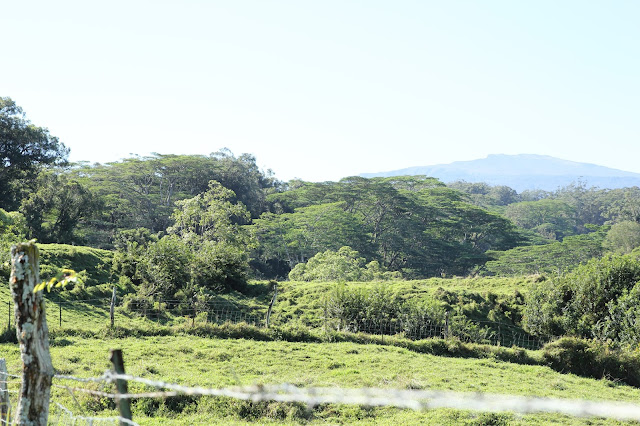 Road to Hana landscape