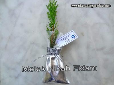 Elif Ozan Nikah Bitkisi İzmir 1