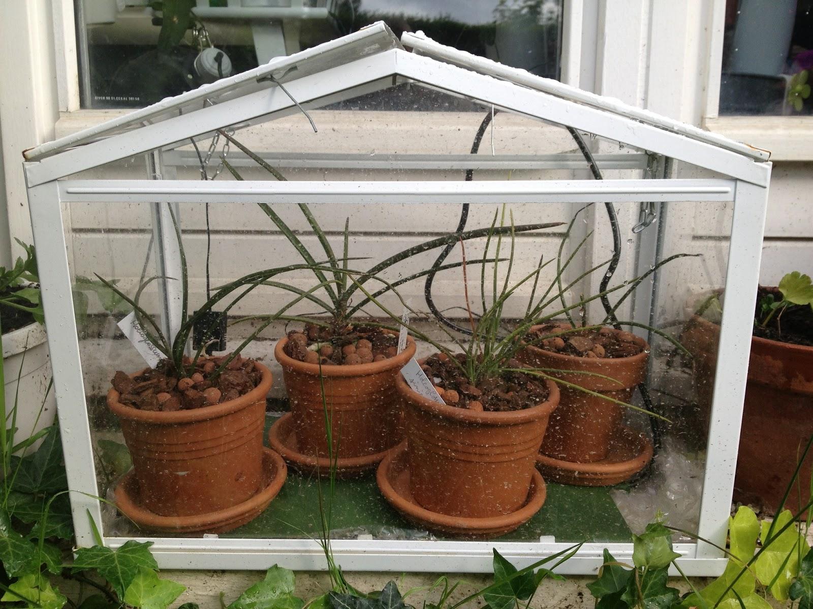 construire mini serre jardin mini serre de jardin lovely serre de jardin mini serre verre. Black Bedroom Furniture Sets. Home Design Ideas