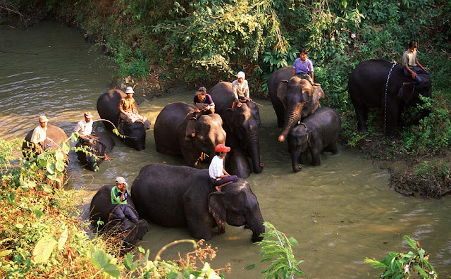 Alaungdaw Kathapa National Park elephant herd need a bath
