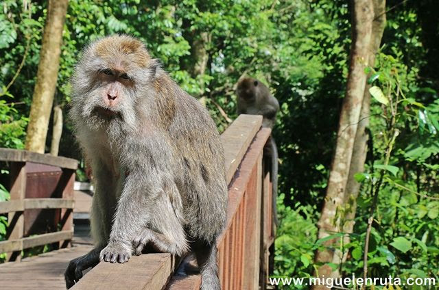 Monkey-Forest-Ubud