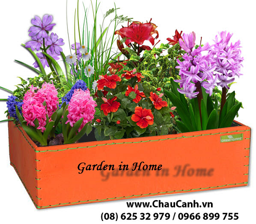 Chuyên cung cấp các loại chậu hoa đẹp Greenbo trên Toàn quốc
