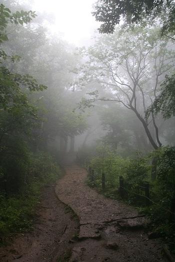 chemin de nature