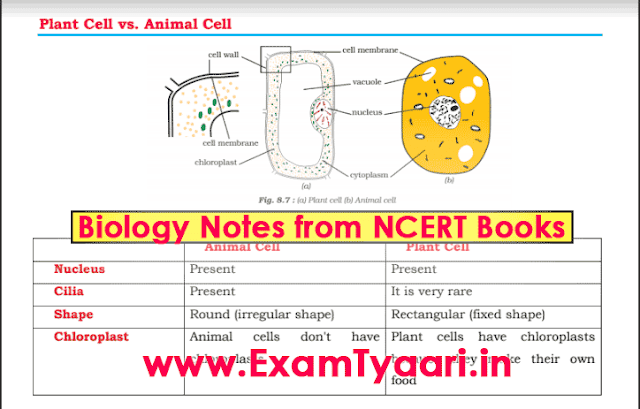 Important E-Book Biology Notes for SSC CGL and IBPS Bank Exams Compiled from NCERT Books - PDF Download - Exam Tyaari