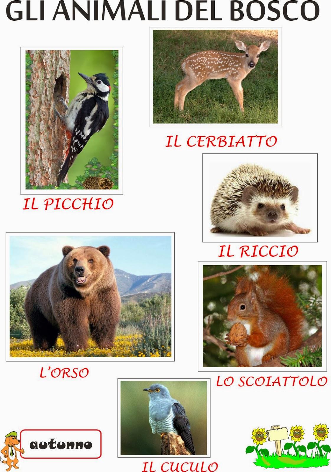 A Scuola Con Poldo Gli Animali Del Bosco