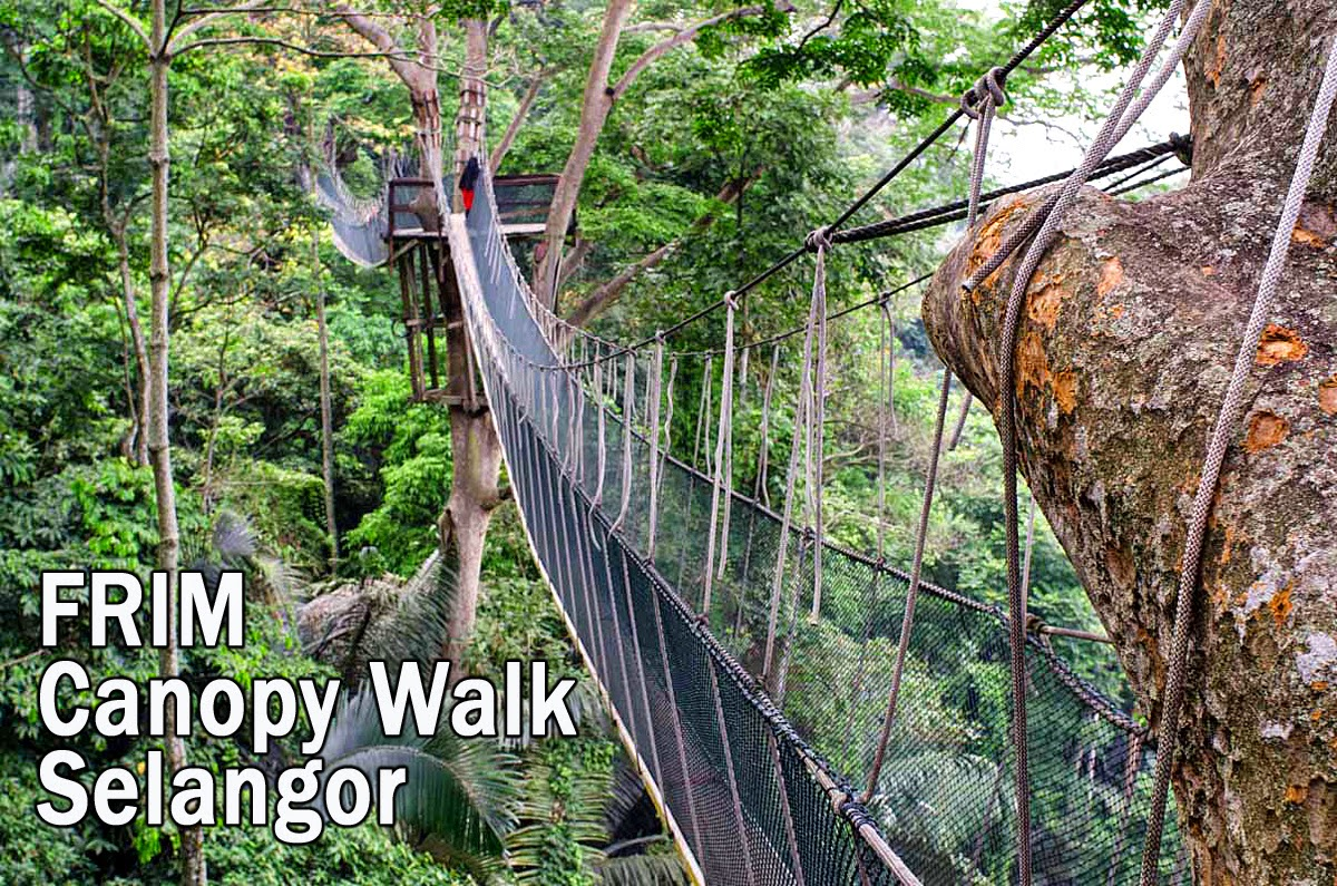 FRIM Canopy Walk KL