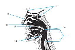 Bagian Dan Fungsi Hidung
