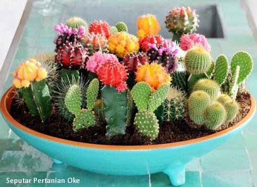 Peluang Usaha Menjanjikan Souvenir Bunga Kaktus Mini